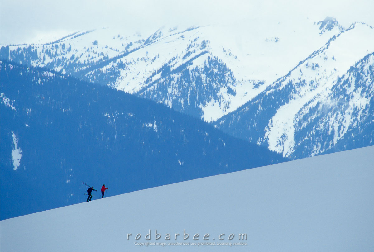 barbee_11589 |  Cross country skiers climbing hill on Hurricane Ridger, Olympic National Park, WA