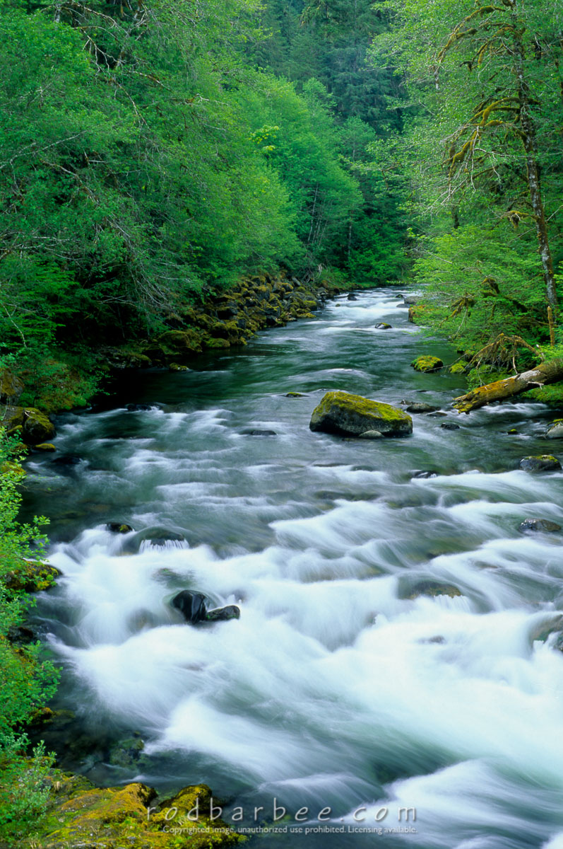 barbee_11713 |  Sol Duc River, Olympic National Park, WA