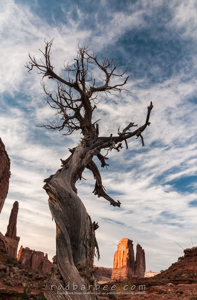 Barbee_110412_3_6821 |  Skeletal tree along Park Avenue. Courthouse Towers in the Background. Arches National Park, UT