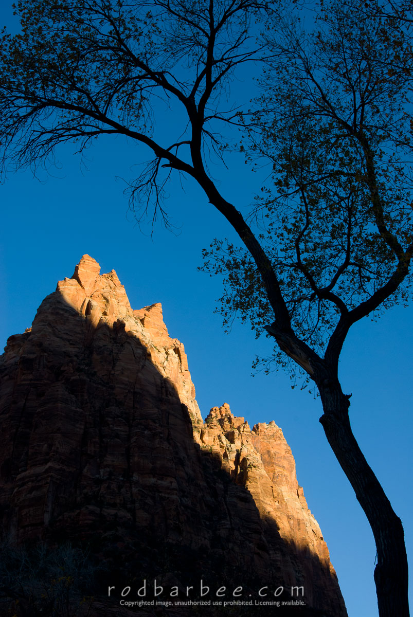 Barbee_071110_2_1817 |  Silhouette  of cottonwood in the Court of the Patriarchs. Mt. Moroni in background.