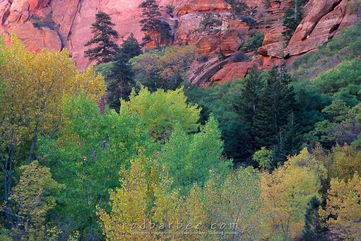 Barbee_11024 |  Autumn color along the Taylor Creek Trail in the Kolob Canyons area of Zion National Park