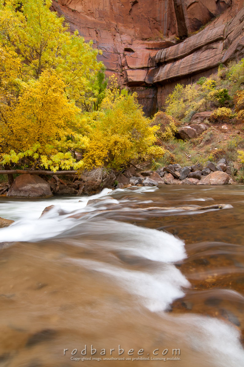 Barbee_111105_3_4662 |  Fall color along the Virgin River, Zion National Park, UT