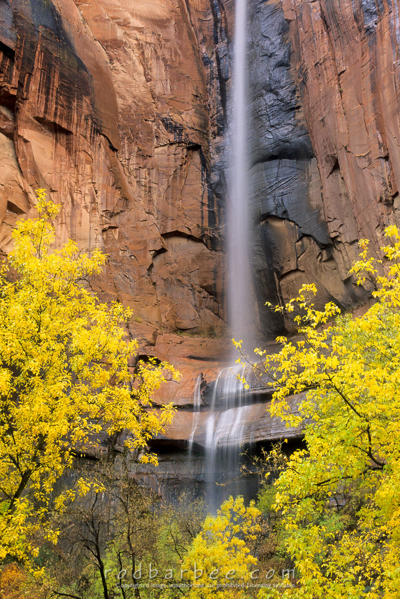 barbee_12043 |  Waterfall and fall color in the Temple of Sinewava, Zion National Park, UT. Heavy rain causes waterfalls throughout the canyon.
