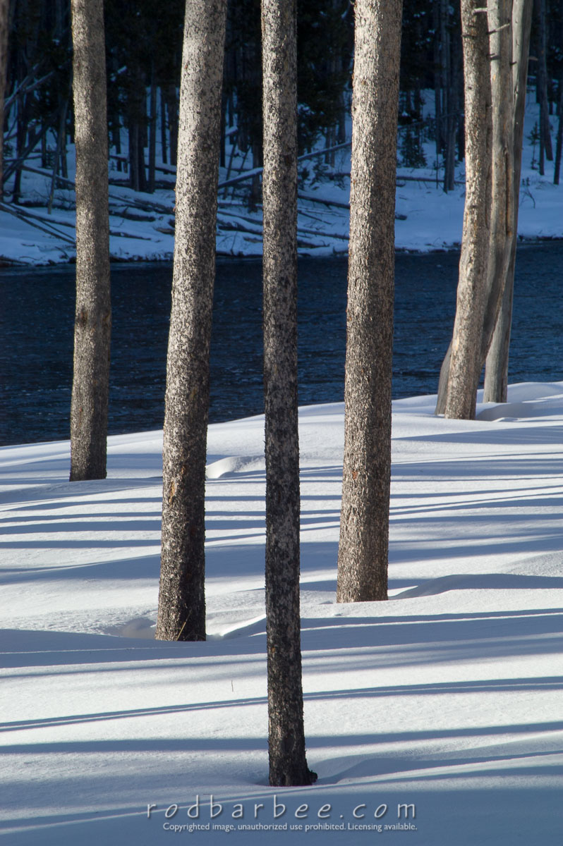 Barbee_060119_1_9840 |  Pine trees and shadows in snow. vr on