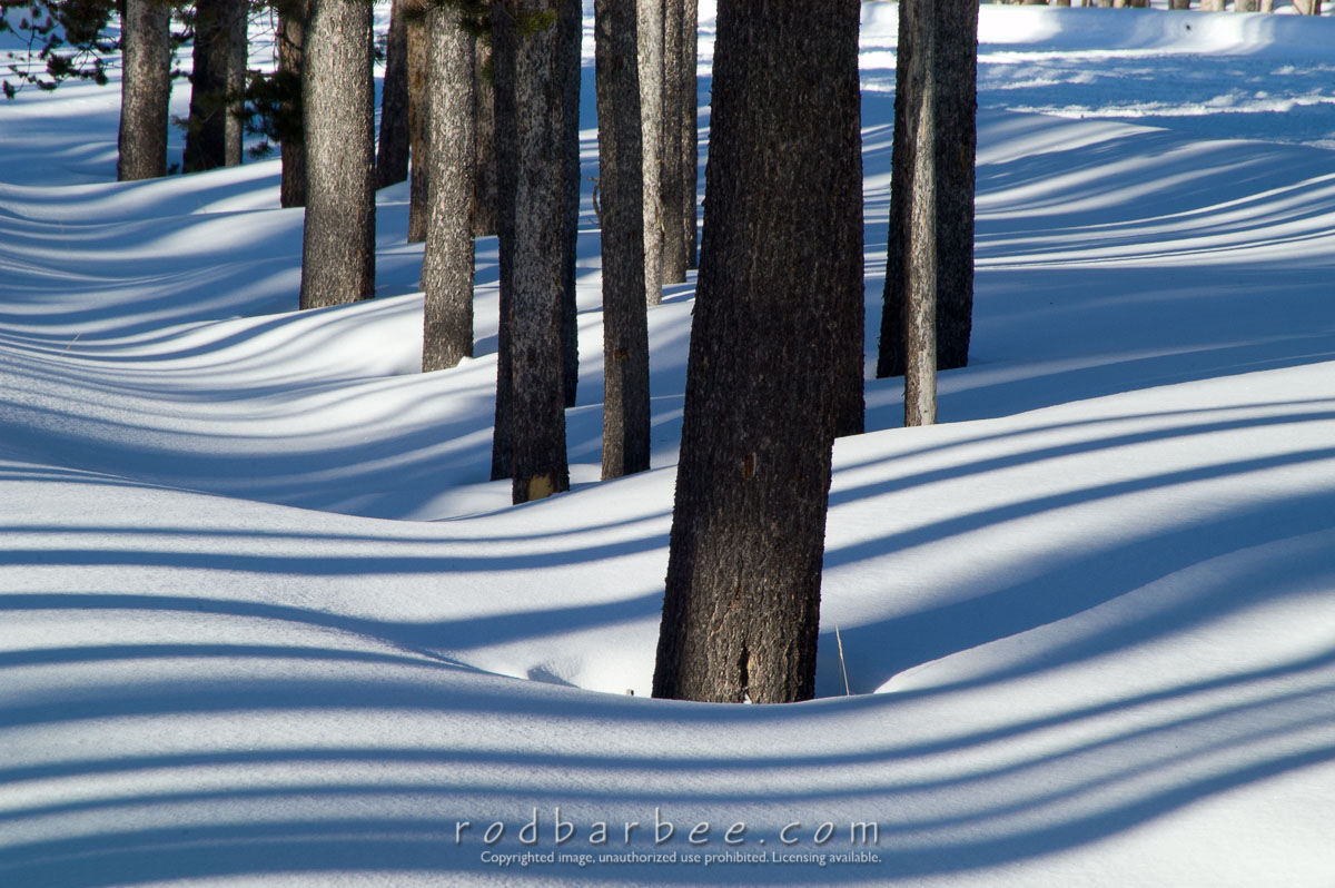 Barbee_060119_1_9842 |  Pine trees and shadows in snow, handheld, vr on