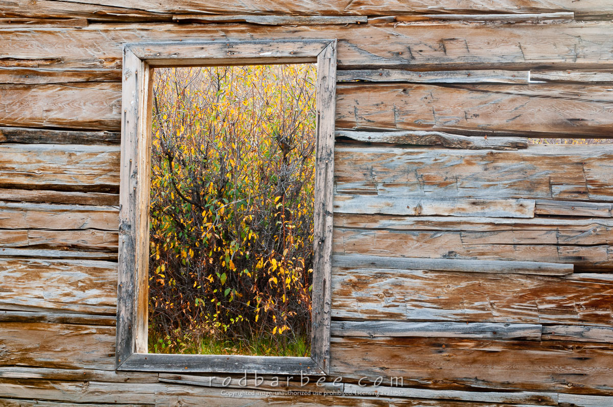Barbee_101006_3_5625 |  Window of old abandon cabin on Gros Ventre road. Looking out at fall foliage. Grand Teton National Park, WY