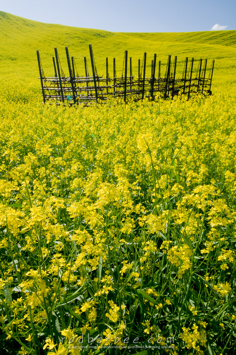 Barbee_100619_3_4517 |  Canola field and old farm equipment.
