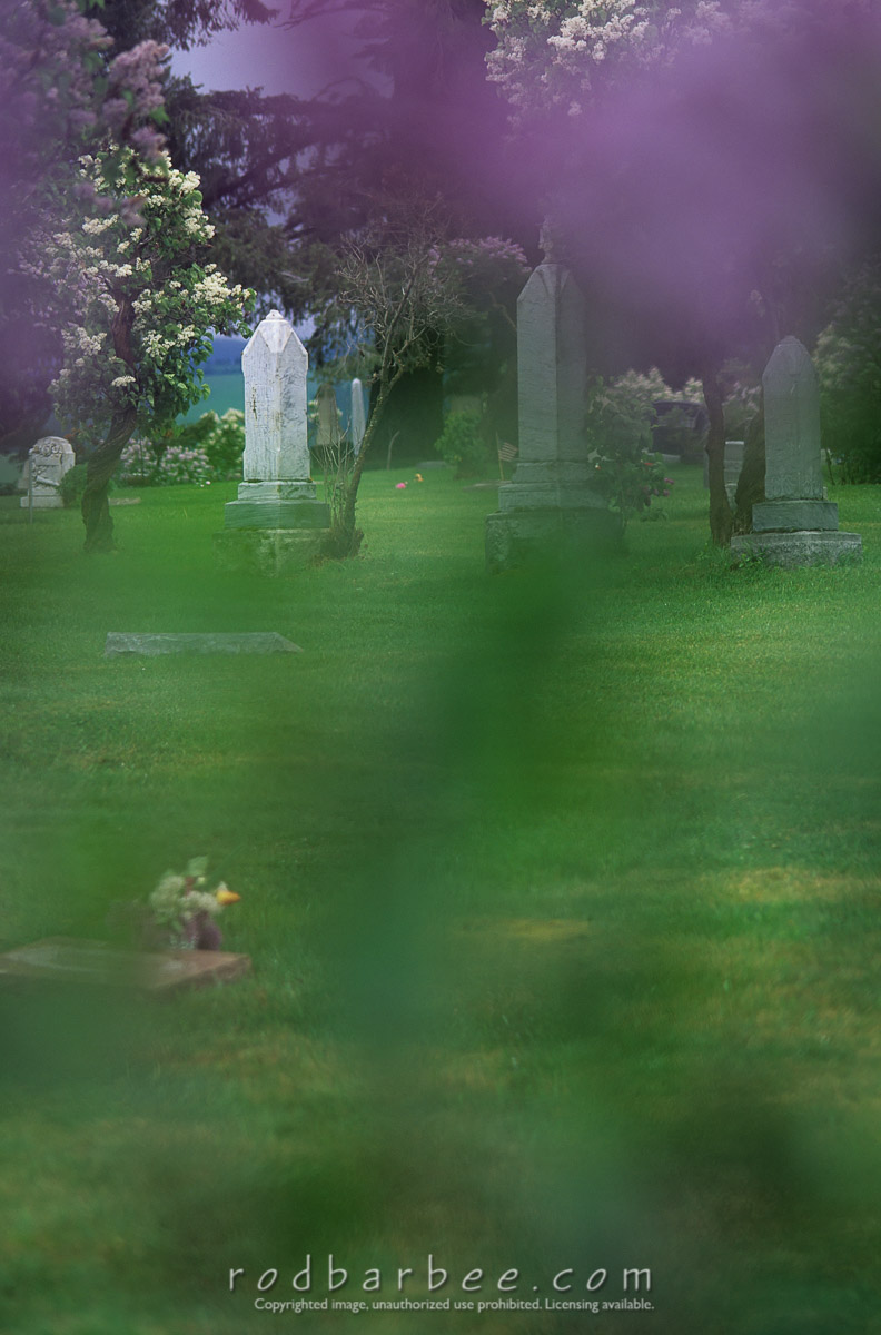 Barbee_10839 |  Cemetery through veil of purple lilac and green leaves. Example of using natural filters.