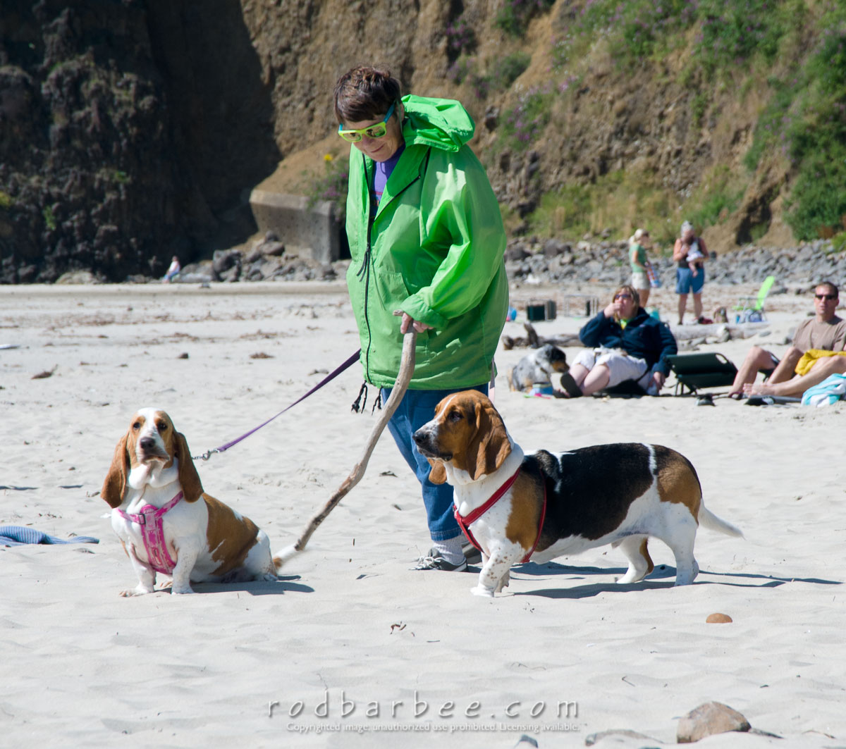 Barbee_110811_3_0558 |  Lady in green and her Basset hounds on the beach at Oceanside, OR. August 2011
