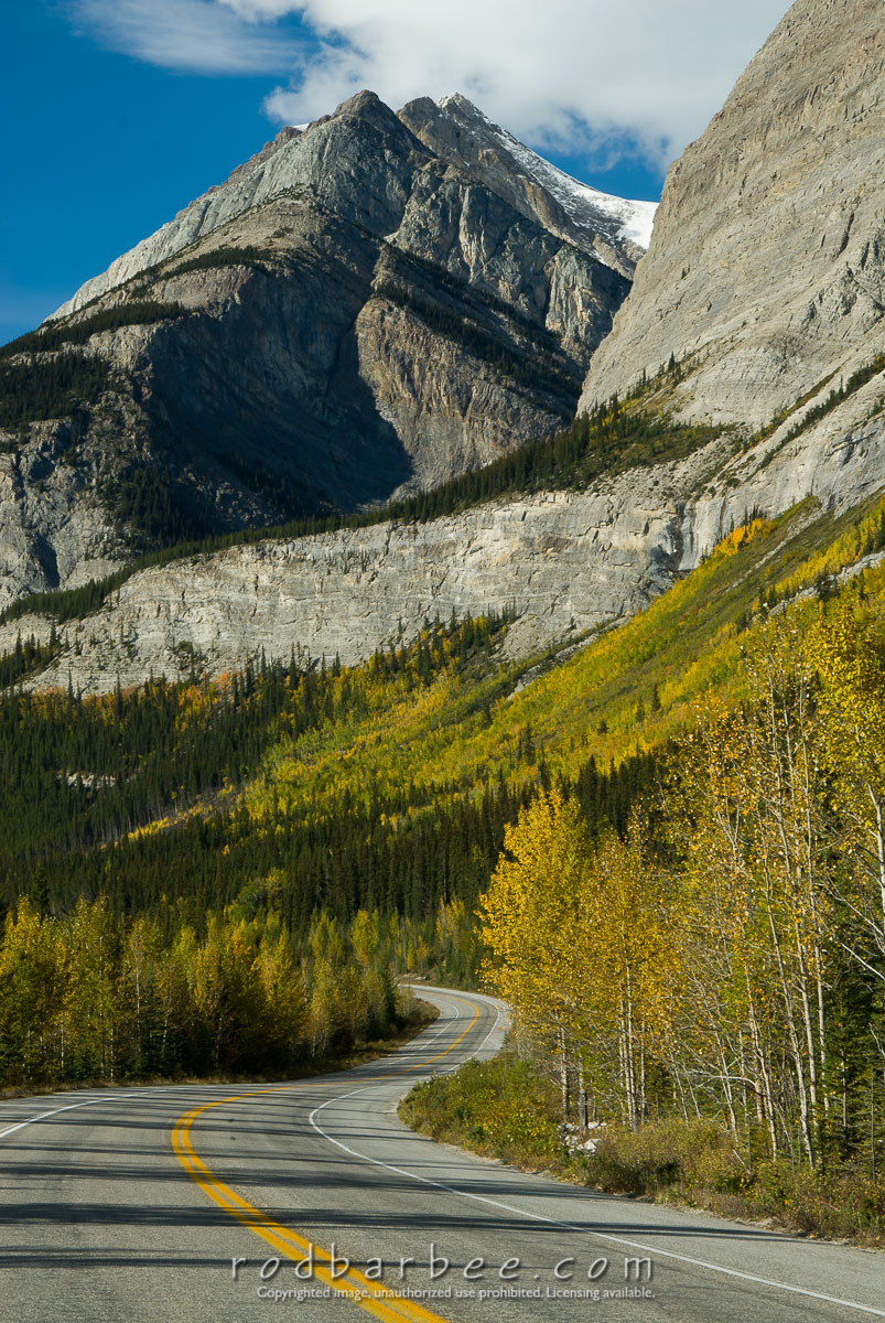 Barbee_070924_2_1297 |  Fall color and winding road along the Icefields Parkway, Banff National Park