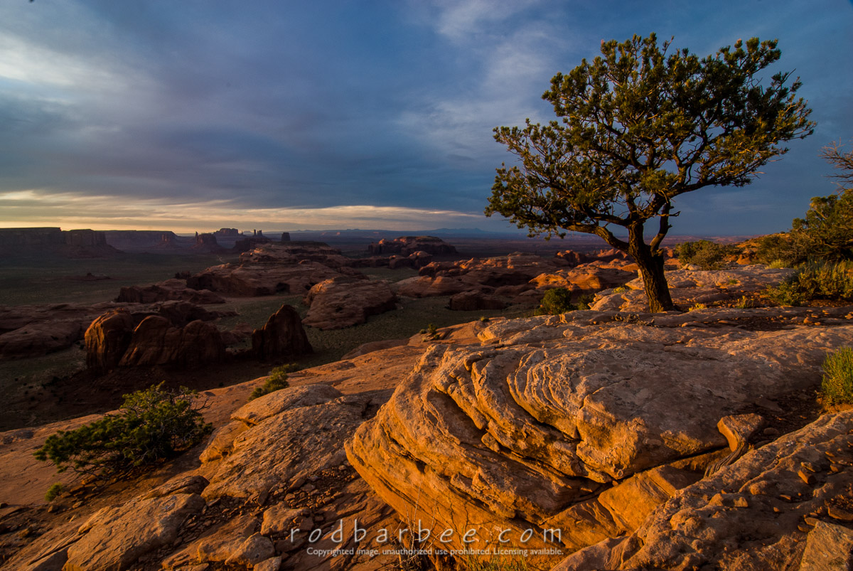 Barbee_070524_2_8550 |  Lone pine at sunset atop Hunt's Mesa, Monument Valley