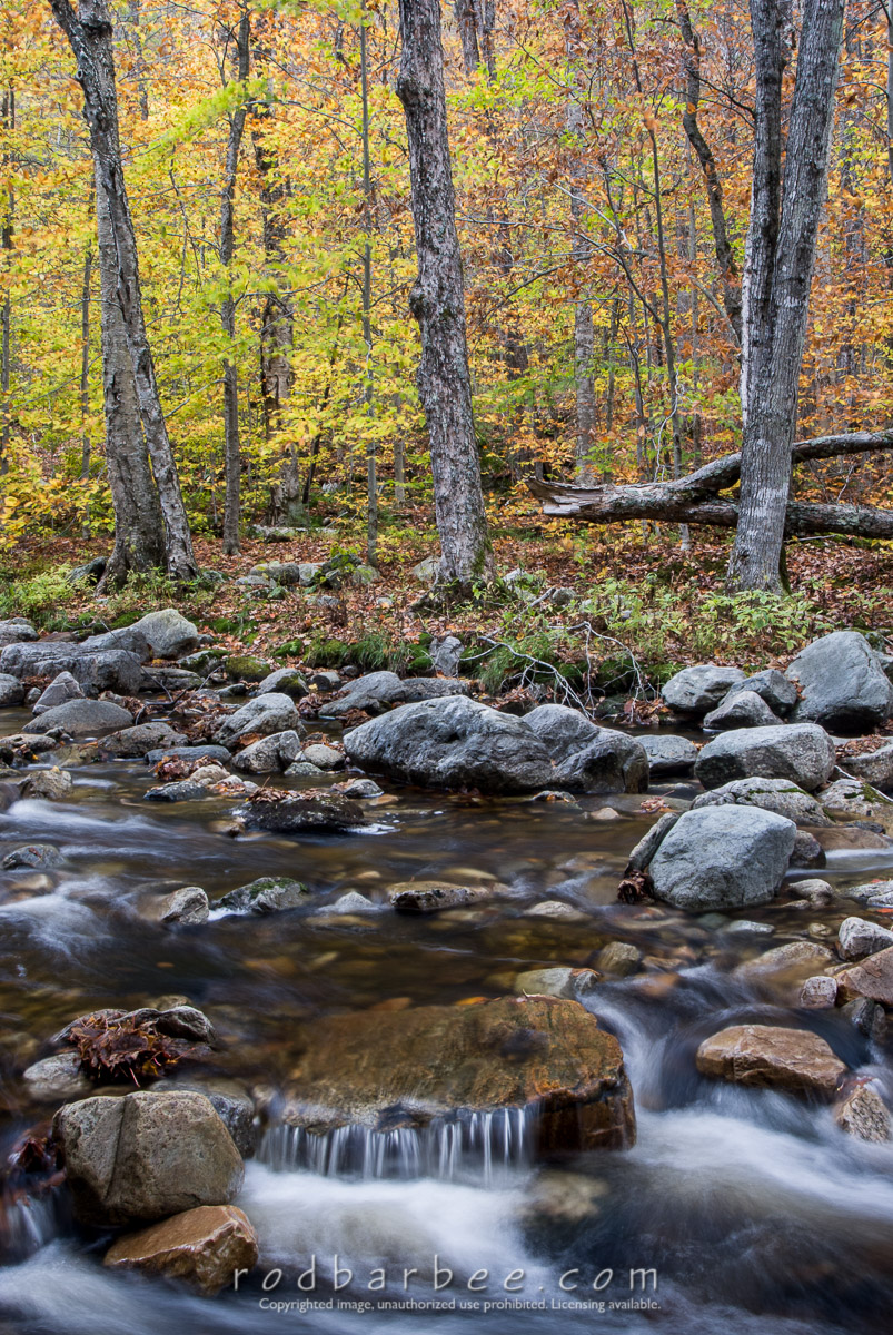 Barbee_071014_2_1384 |  Big Branch Creek and forest in autumn