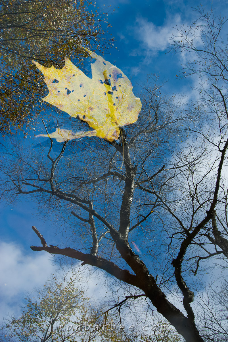 Barbee_071015_2_1496 |  Leaves and reflection double exposure