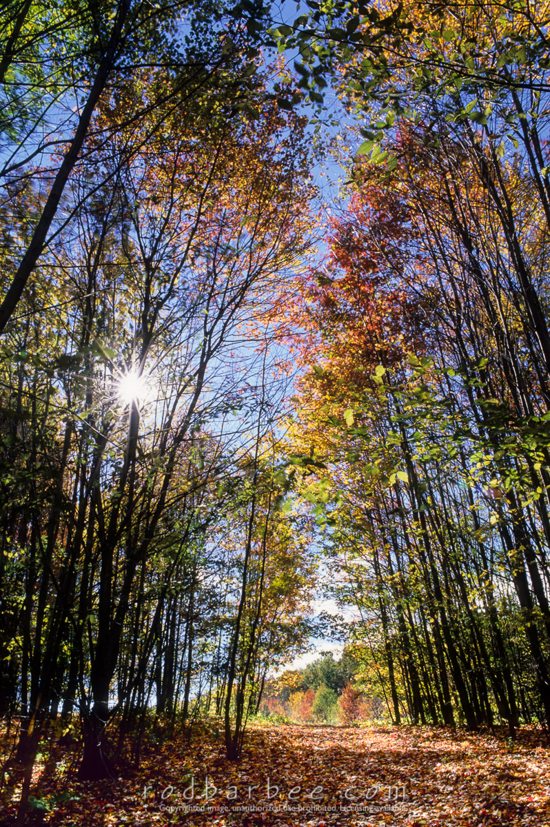 barbee_13316 |  Sunlight streaming through forest path in autumn.