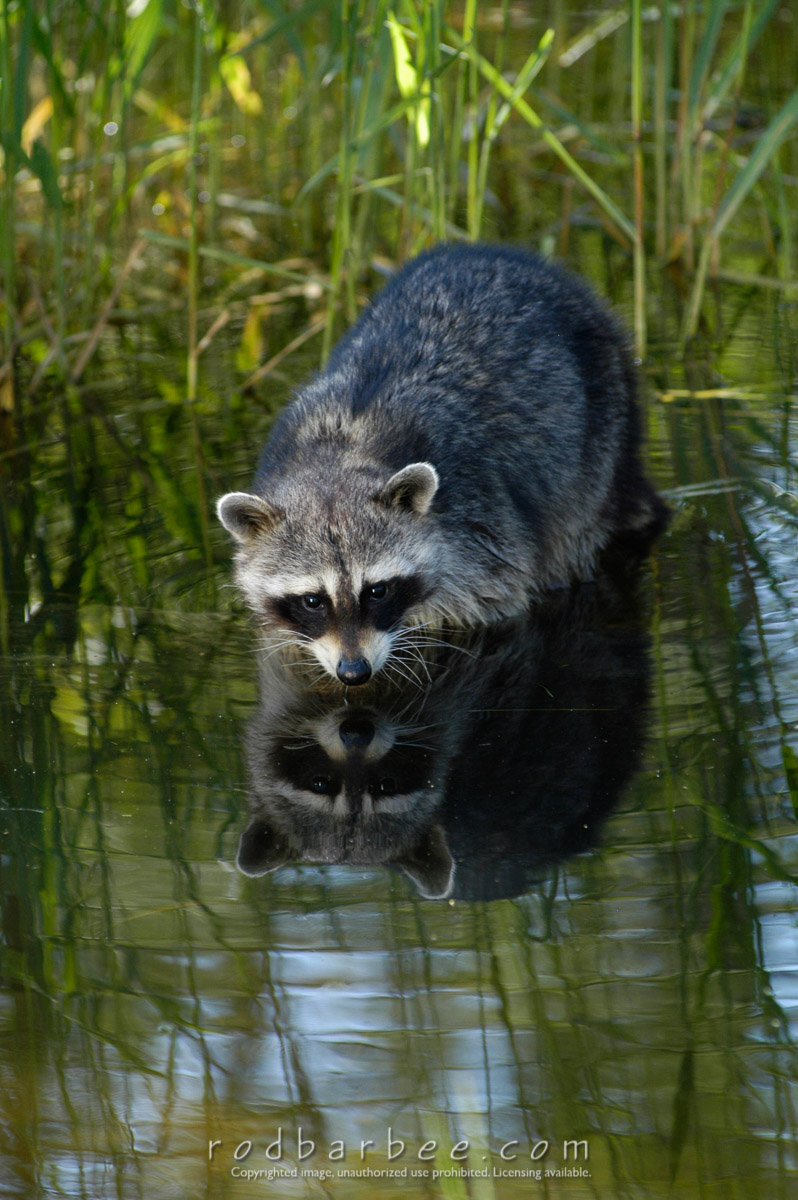"""Barbee_030607_1_2101 