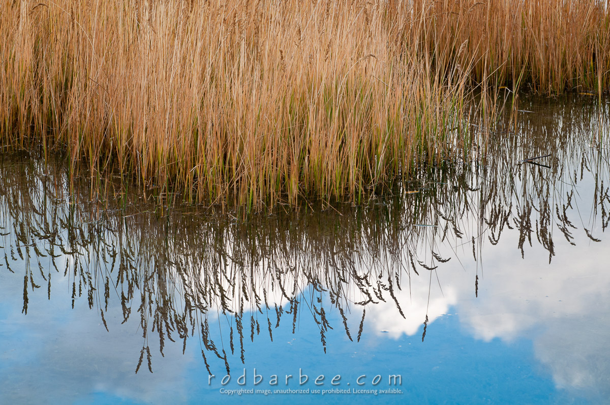 Barbee_101009_3_5854 |  Grasses and reflection at Schwabacher's Landing. Grand Teton National Park, WY